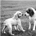 DOG TRAINING ADVICE: WILL NEW DOG BE SAFE AT DOG PARK?