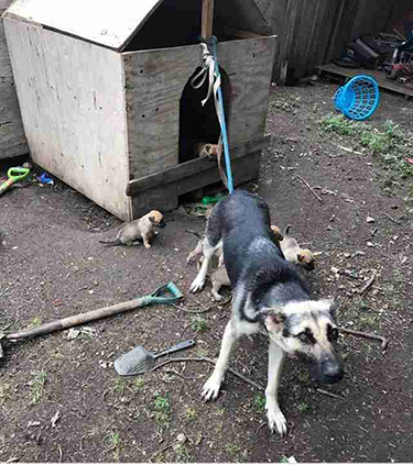 IT IS ILLEGAL TO KEEP A DOG TIED UP IN A YARD - The ...