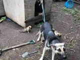 IT IS ILLEGAL TO KEEP A DOG  TIED UP IN A YARD