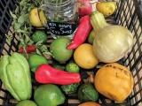 TURNING FOOD DESERTS  INTO FOOD HARVESTS