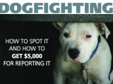 Reward for Reporting Dog Fighting